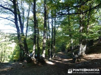 El Castañar de El Tiemblo , Un bosque mágico;grupo de montaña madrid;clubs de senderismo